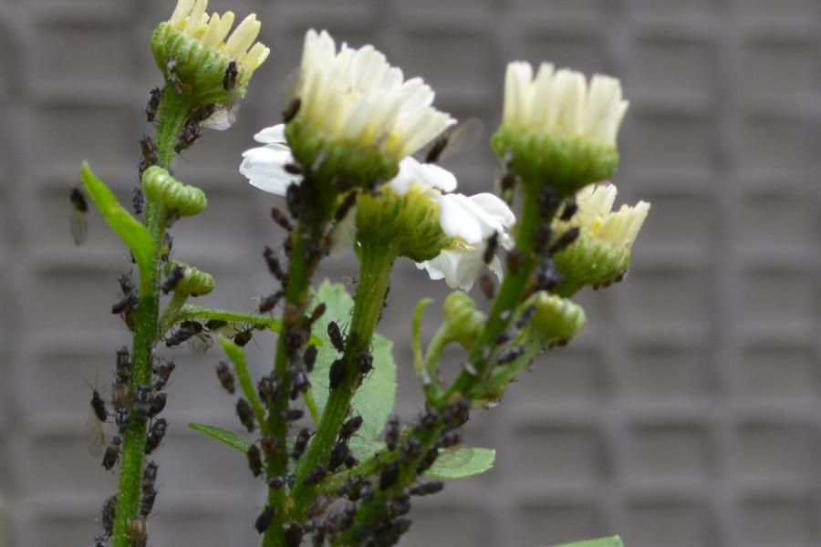 Dr honigbiene was passierte 2015 for Boden nass aufnehmen